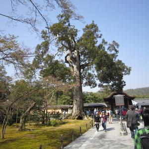 2015年3月京都21 金閣寺1