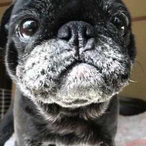 トップアイドル犬の顔にも・・・