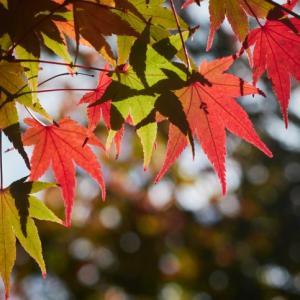 紅葉は、緑