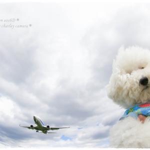 間近に迫る飛行機を・・・