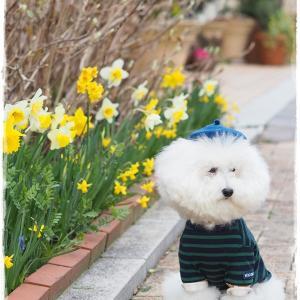 のんびり春お写ん歩*