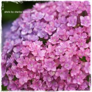 小花の集まり(*^-^*)