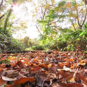 雑木林の紅葉、つづきです