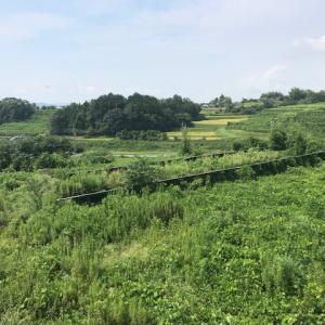太陽光設備周りの管理 草刈作業