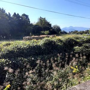 自然農法の田んぼ 稲刈り終わりました