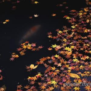 晩秋の落葉