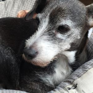 *2019・8月・9月分 保護犬支援金寄付のご報告*