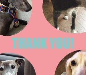 *2018・10月分保護犬支援金寄付のご報告*