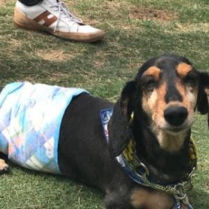*2018年4月分保護犬支援金寄付のご報告*|本日現在のご注文状況|GW中の営業日について