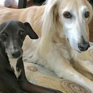 *2019・5月・6月分保護犬支援金寄付のご報告*|4 doggies 近影