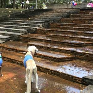 *2019・7月分保護犬支援金寄付のご報告*|涼を求めて