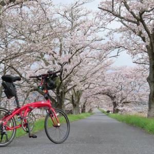法勝寺の桜並木
