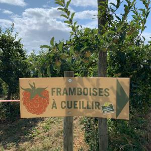 ベルサイユ近郊ギャリー農園♪夏のフルーツ狩り♪
