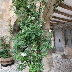 フランスの最も美しい村を巡る旅♪ブルゴーニュ地方・ノワイエ Noyers