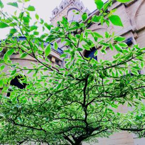 パリお散歩風景とグリーンゾーン