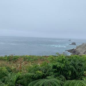 7月のブルターニュ ラ岬までお散歩