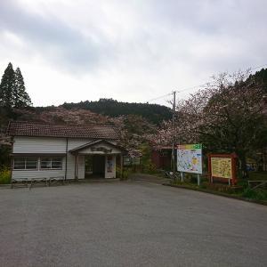 月崎駅周辺の春