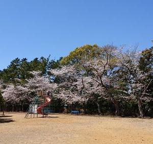 桜便り2020 今年は少々桜も寂しげ?