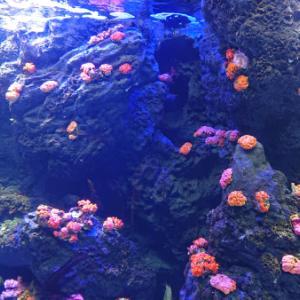 いよいよ四国水族館
