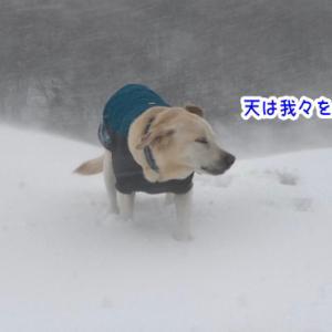 新潟雪の陣♪ ③