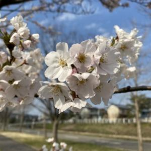 春を満喫♪