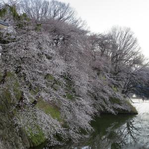 霞城公園の桜並木とED75牽引の山形工臨