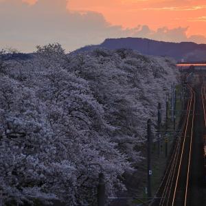 夜明け直後の一目千本桜とED75牽引の山形工臨