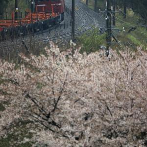 斎川宿の桜とED75-758牽引の翁島工臨返空を撮る!