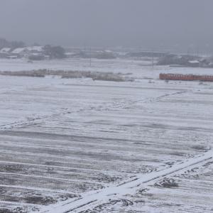 雪景色となった八森の田園地帯とタラコ色のキハ40