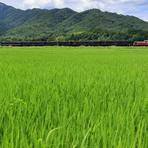 地福の田園地帯を往く、DD51-1043牽引の「DLやまぐち号」を撮る!