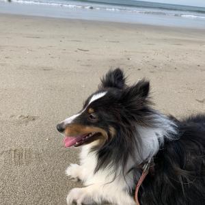 大好きしぇりちゃん ㊺  海までお散歩