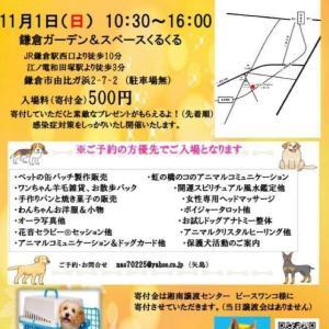11月1日は、鎌倉のくるくるさんにいます。