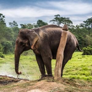 """""""鎖に繋がれた象""""が鎖を断ち切る方法"""
