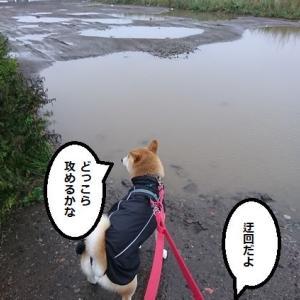 おやつで交渉(海散歩)