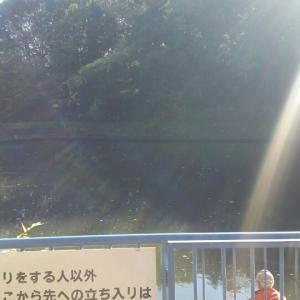 平成29年11月16日(木) 釣果報告 熊の池