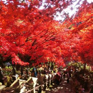 いよいよ大山寺の紅葉