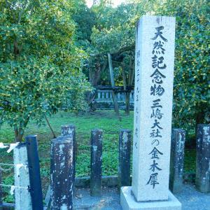 三嶋大社のキンモクセイ2020/09/30