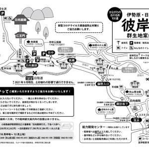 日向薬師周辺の彼岸花MAPとバス時刻表