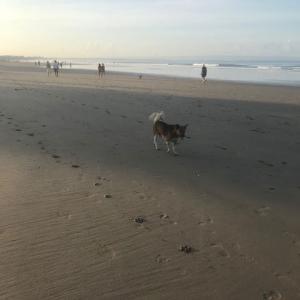 朝の海は最高@バリ島