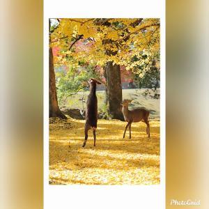 こんな光景を見たくて奈良へ♪