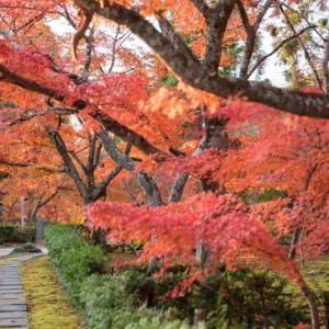 秋、秋、そう、秋だった