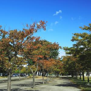 酒田市内の公園でも紅葉が始まりました