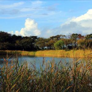 飯森山公園の秋が進む
