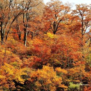 紅葉の美しい白山白川郷ホワイトライン