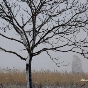 雪景色の最上川河川敷