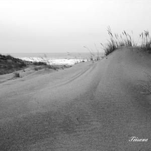 砂浜はモノクロで表現