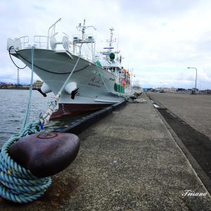 イカ釣り船が大和堆での操業を取り止め帰港
