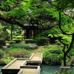 新緑の清亀園庭園