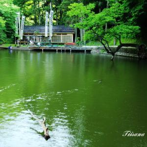 元祖人面魚の貝喰池