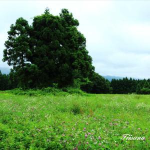 鳥海山麓は緑でいっぱい
